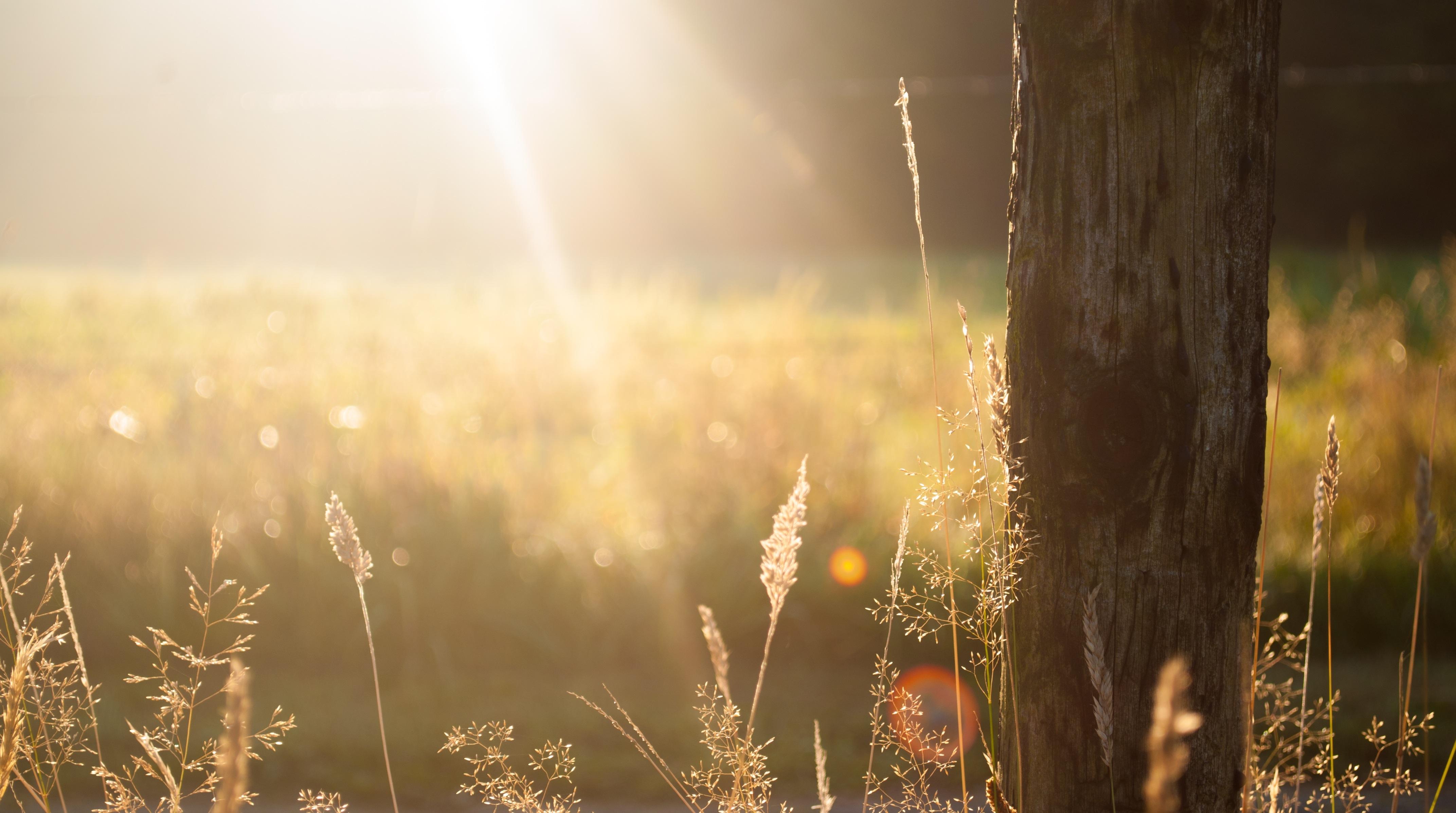 Zwaddi - stick & sunset