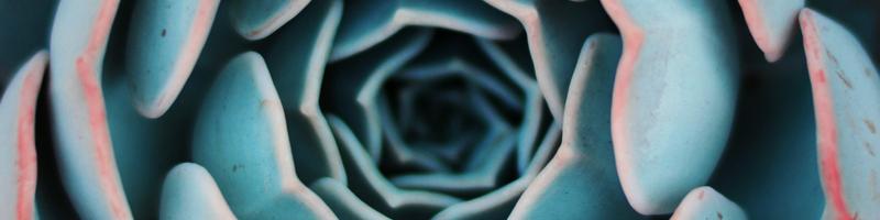 succulent expand - canva 800x600