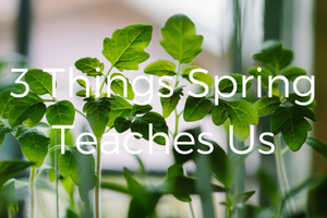 spring canva 300x200 px (1)