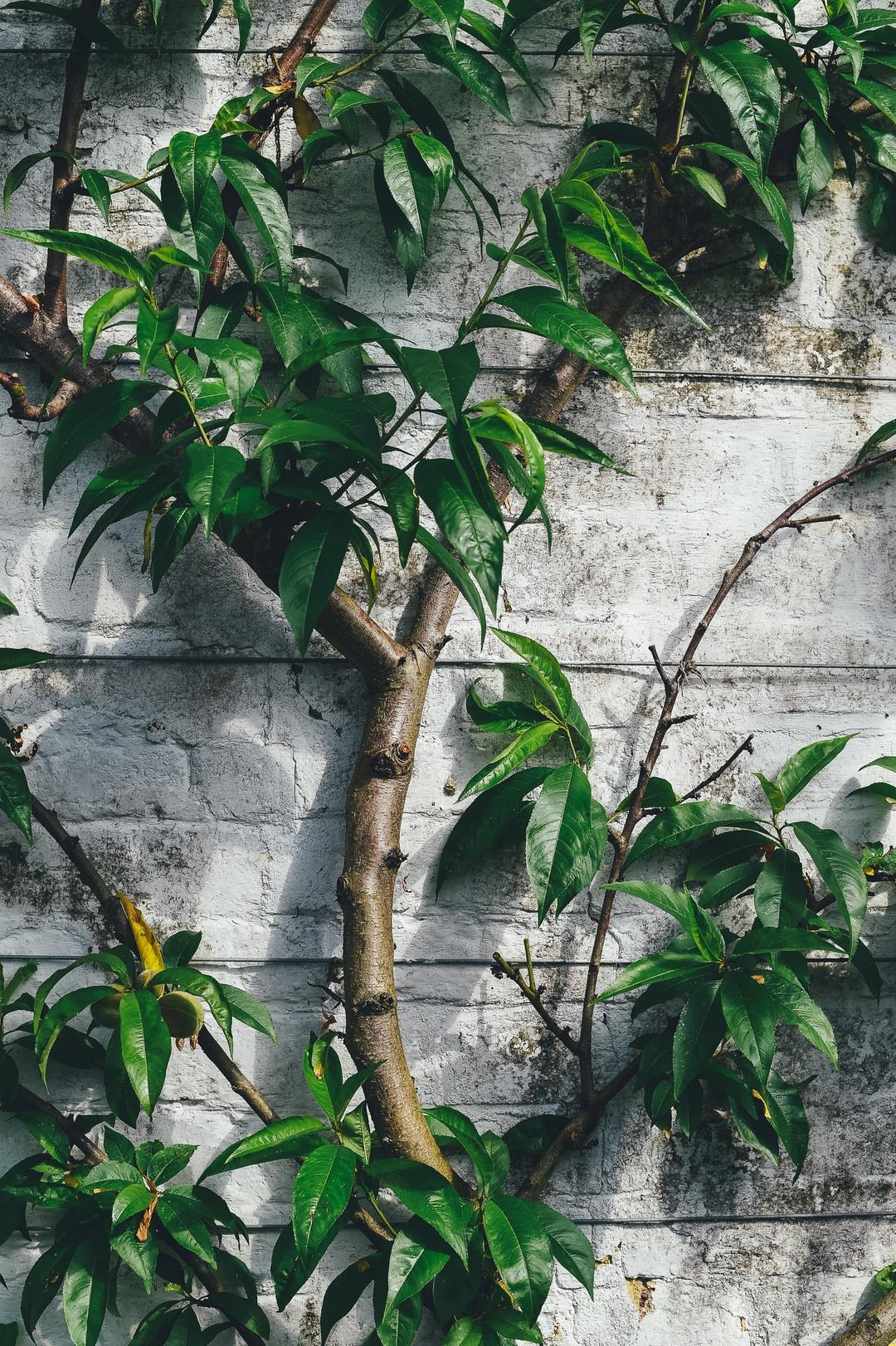 annie spratt tree