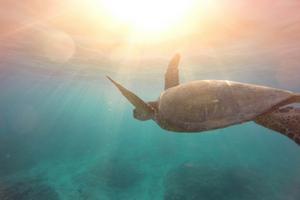 compassion turtle canva 300x200 px