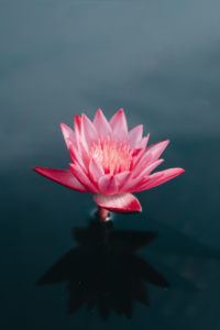 lotus portrait - canva