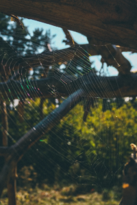 spiderweb - portrait canva